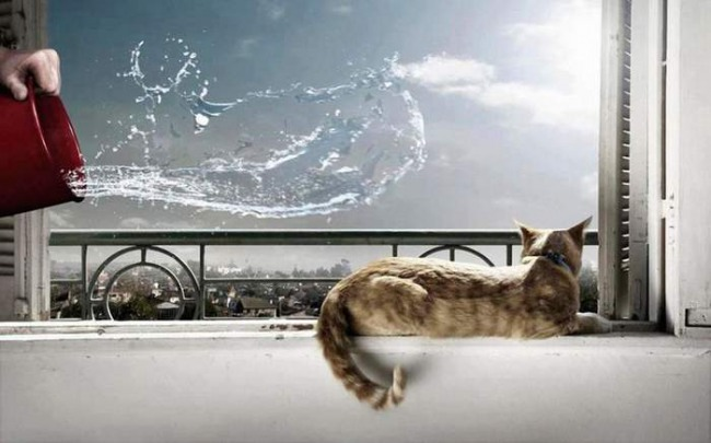 Funny picture  about cat and revenge