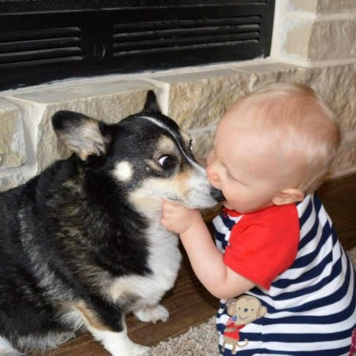 Funny picture  about dog and children
