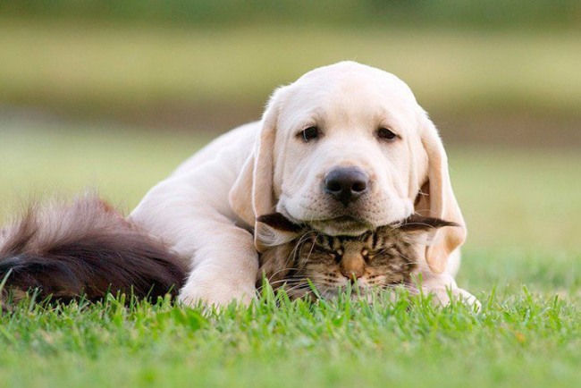 Funny picture  about cat and dog