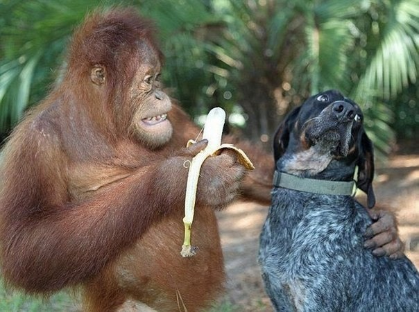Funny picture  about monkey and dog