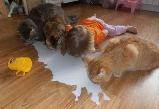 Funny picture  about cat and children