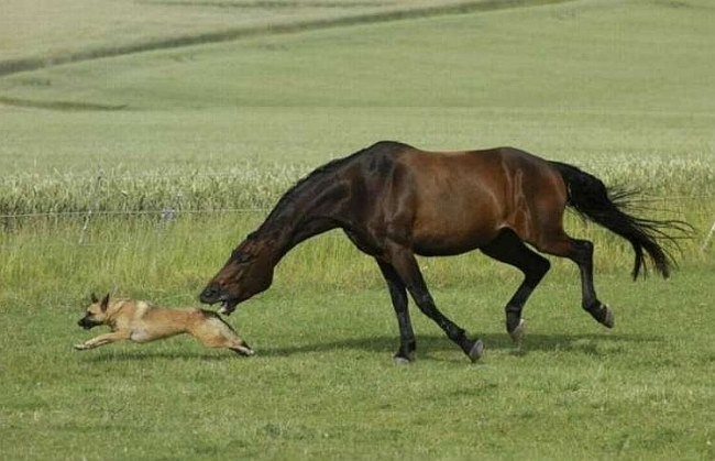 Funny picture  about horse and dog