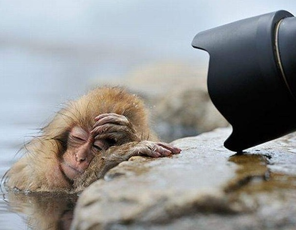 Funny picture  about monkey