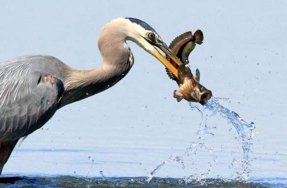 Funny picture  about birds and fish