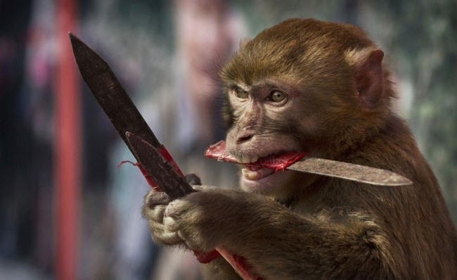 Funny picture  about monkey and knife