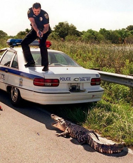 Funny picture  about police and crocodile