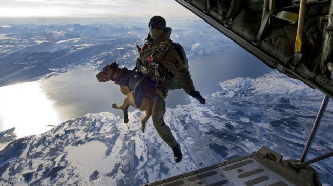 Funny picture  about military and dog
