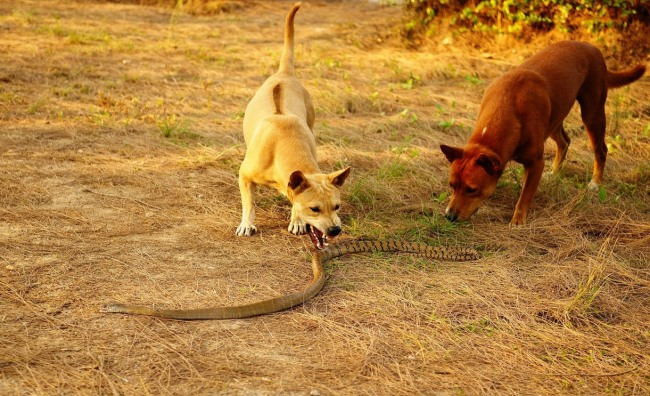 Funny picture  about dog and snake
