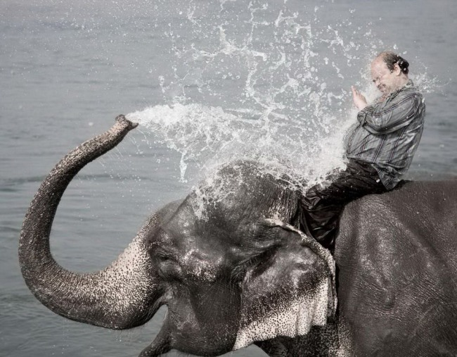 Funny picture  about elephant