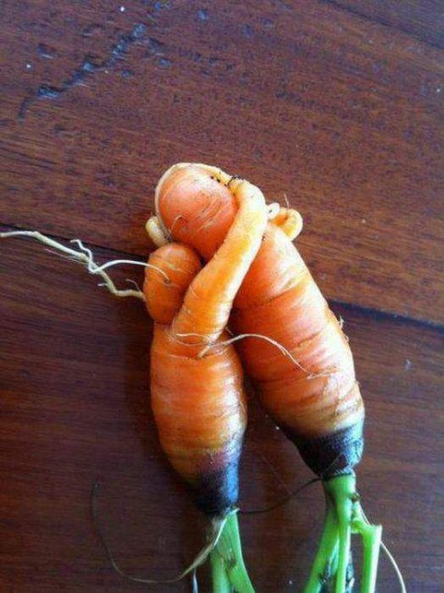 Funny picture  about carrot