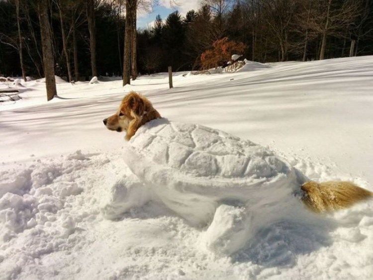 Funny picture  about dog and snow