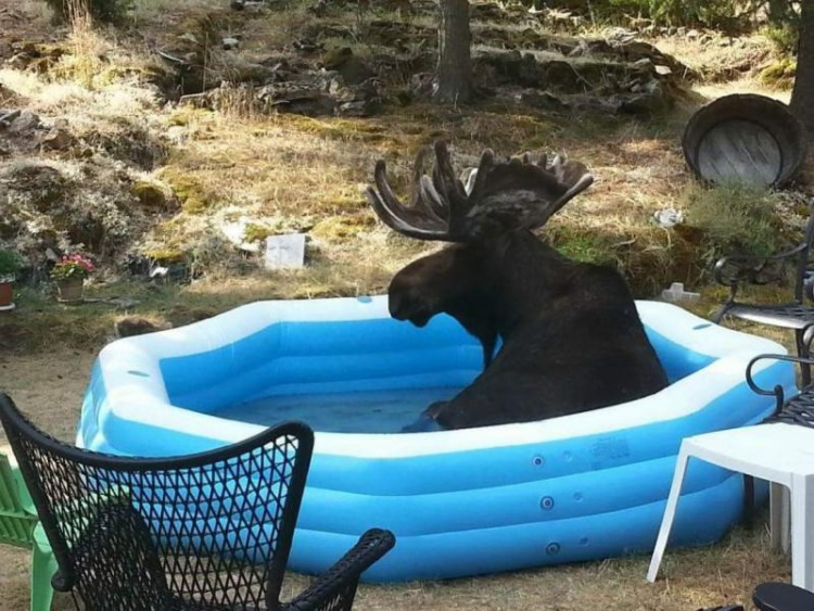 Funny picture  about elk