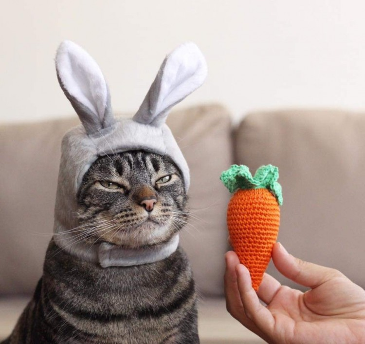 Funny picture  about cat